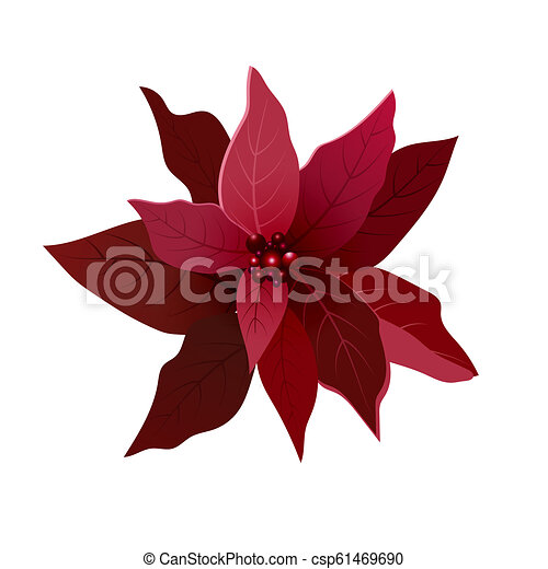 Beautiful Red Poinsettia Flower Christmas Decoration Christmas Ornament Vector Illustration Isolated On White Background Web Canstock