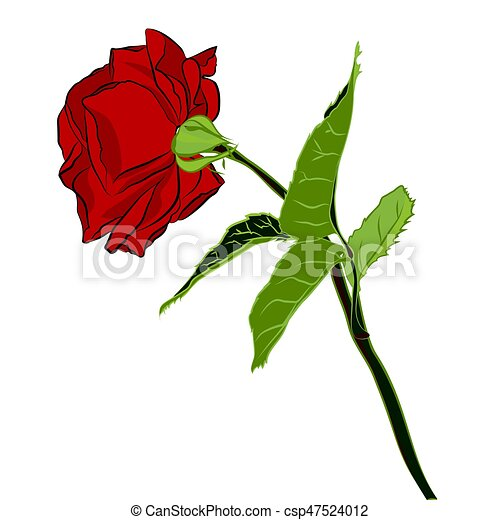 Beautiful red rose isolated on white background botanical beautiful red rose isolated on white background botanical silhouette of flower flat stylization color vector illustration mightylinksfo