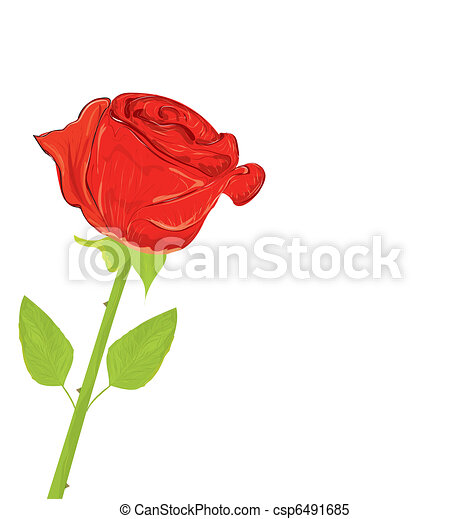 Beautiful red rose, vector illustration - csp6491685