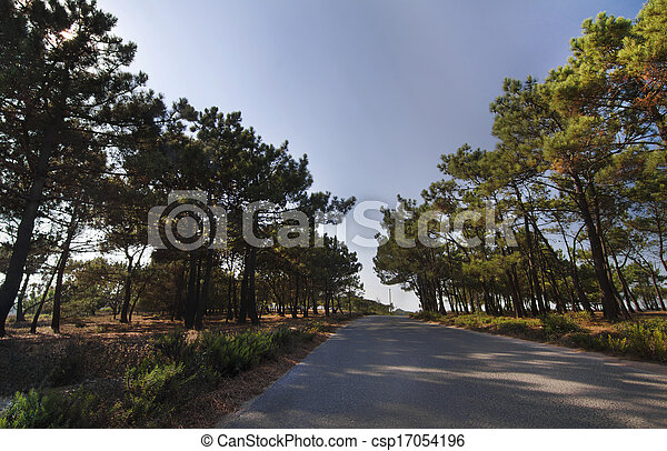 beautiful road surrounded by pine trees - csp17054196