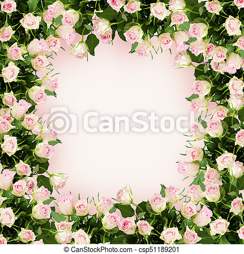 Beautiful rose flowers frame. Beautiful white and pink rose flowers ...