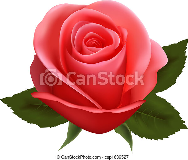 beautiful rose. Vector illustration. - csp16395271
