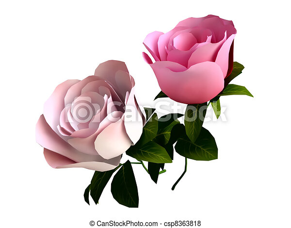 Line Drawing Of Rose Plant : Beautiful roses in d isolated on white background