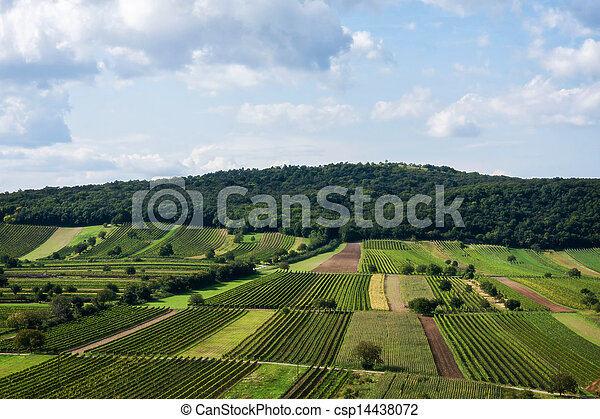 Beautiful rows of viticulture  - csp14438072