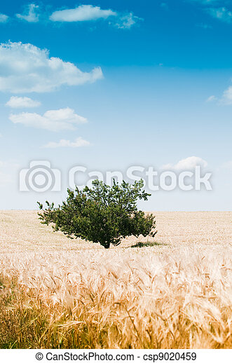 Beautiful rural landscape with tree - csp9020459