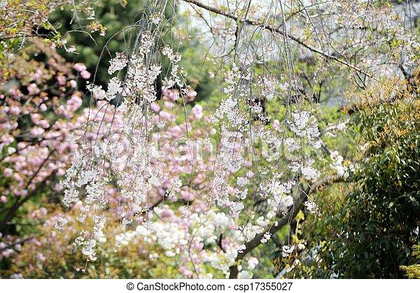 Beautiful sakura place - csp17355027