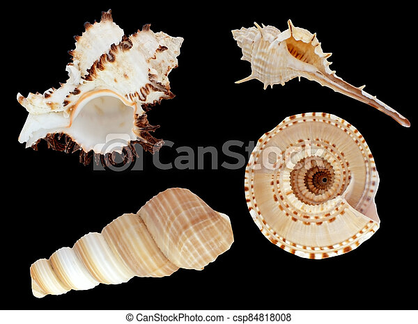 Beautiful Sea shell isolated on a black - csp84818008