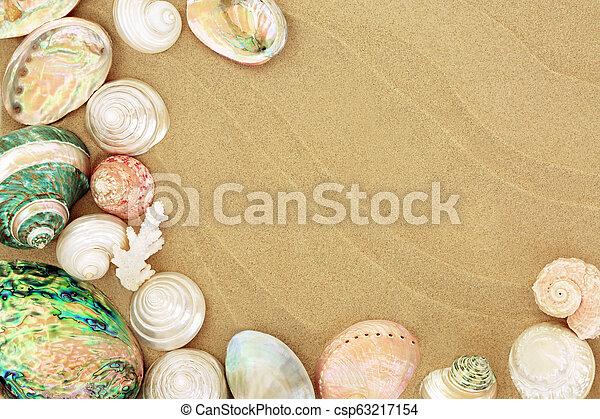 Beautiful Seashells on the Beach - csp63217154