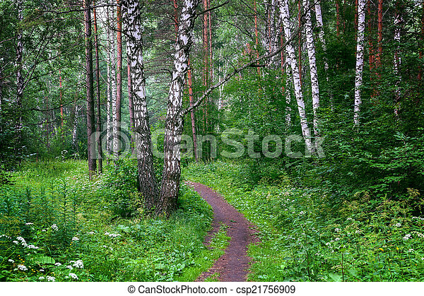 Beautiful Siberian forest - csp21756909