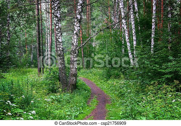 Beautiful Siberian forest - csp21756909