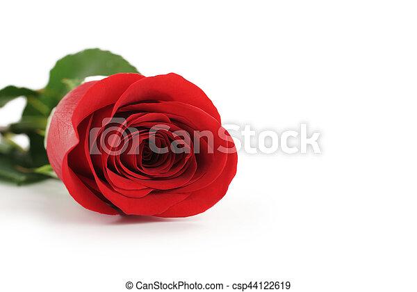 Beautiful single