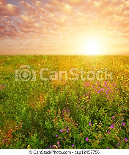 Beautiful sky over flower field - csp12457756