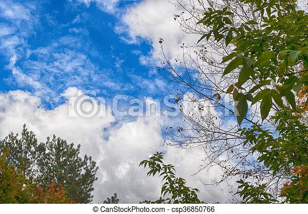 Beautiful sky - csp36850766