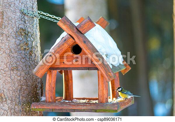beautiful small bird great tit sitting on the bird feeder in winter - csp89036171