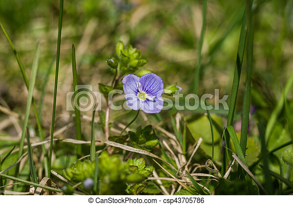 Beautiful Small Blue Flowers In The Grass In Spring