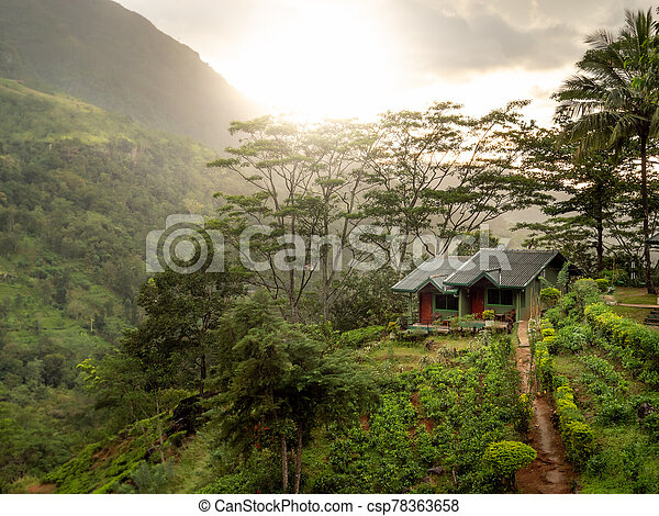 Beautiful small wooden house on the mountain hill in jungle forest at sunrise - csp78363658