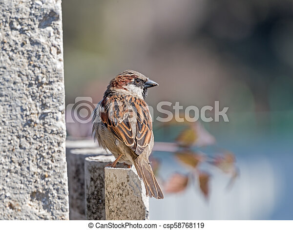 beautiful Sparrow sits on the fence - csp58768119
