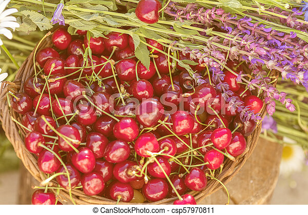 Beautiful spring background with cherries and flowers. Sunlight, sunset. - csp57970811