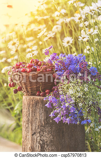 Beautiful spring background with cherries and flowers. Sunlight, sunset. - csp57970813