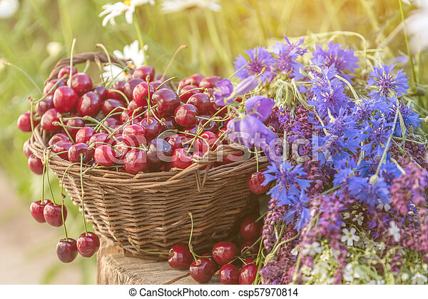 Beautiful spring background with cherries and flowers. Sunlight, sunset. - csp57970814