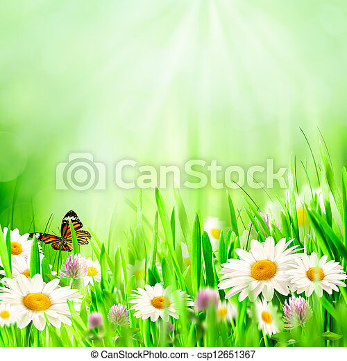Beautiful spring backgrounds with chamomile flowers - csp12651367