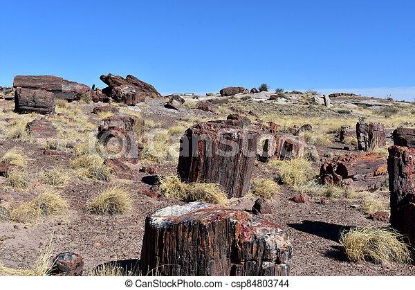 Beautiful Spring Day with Petrified Logs in Arizona - csp84803744