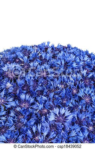 Beautiful spring flowers blue cornflower on background blue flowers beautiful spring flowers blue cornflower on background csp18439052 mightylinksfo