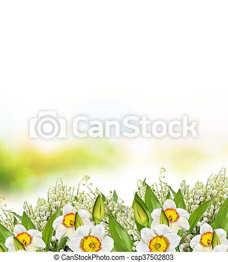 Spring landscape beautiful spring flowers daffodils yellow beautiful spring flowers daffodils yellow flowers csp37502803 mightylinksfo