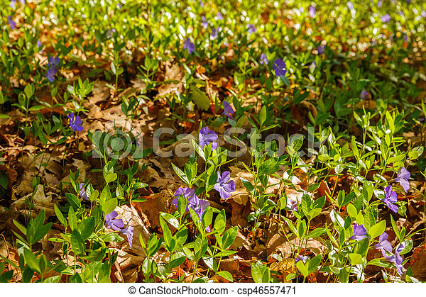 beautiful spring flowers in the forest - csp46557471