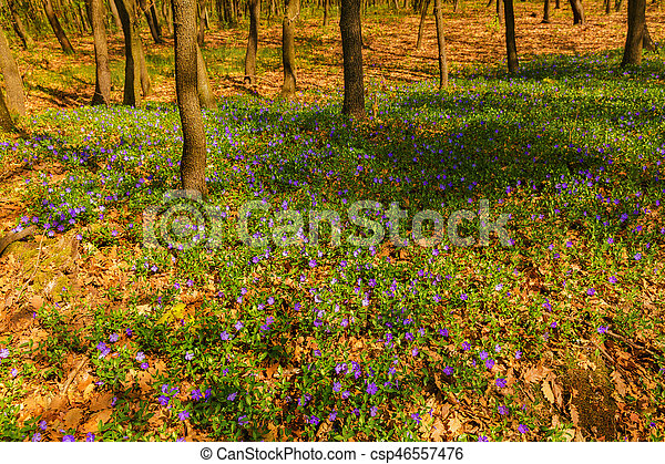 beautiful spring flowers in the forest - csp46557476