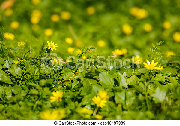 beautiful spring flowers in the forest - csp46487389