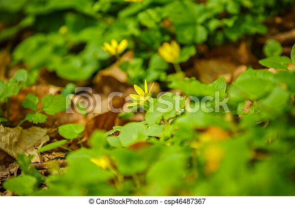 beautiful spring flowers in the forest - csp46487367