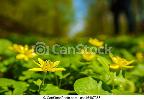 beautiful spring flowers in the forest - csp46487368
