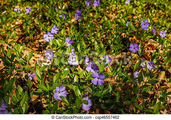 beautiful spring flowers in the forest - csp46557462