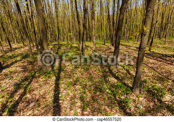 beautiful spring flowers in the forest - csp46557520
