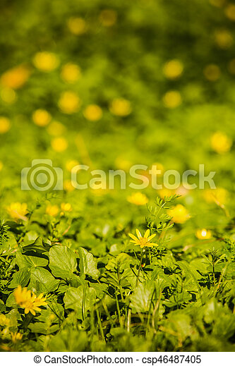 beautiful spring flowers in the forest - csp46487405
