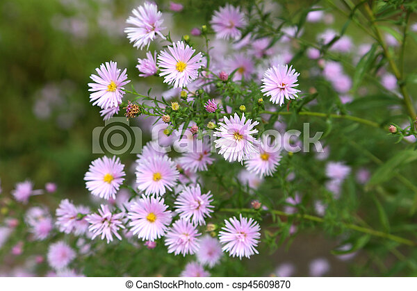 Beautiful spring flowers in the garden - csp45609870