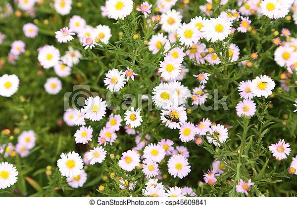 Beautiful spring flowers in the garden - csp45609841