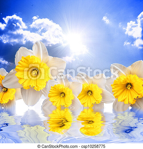 Beautiful spring flowers on the sky background reflacting in wat - csp10258775