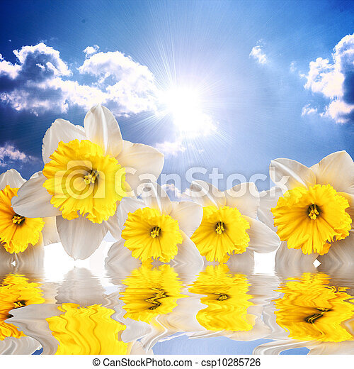 Beautiful spring flowers on the sky background reflacting in wat - csp10285726