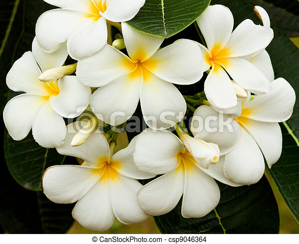 beautiful spring flowers - csp9046364