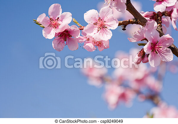 Beautiful spring flowers with clear blue sky. - csp9249049