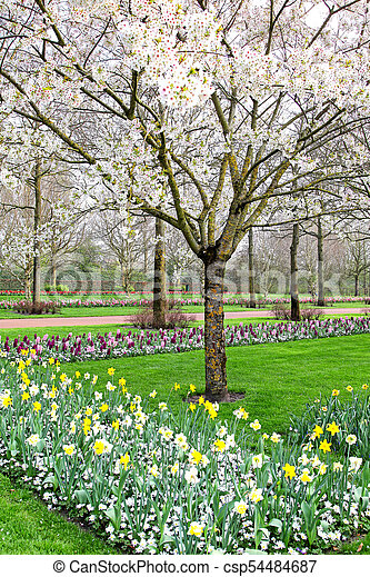 Beautiful spring garden with cherry tree - csp54484687