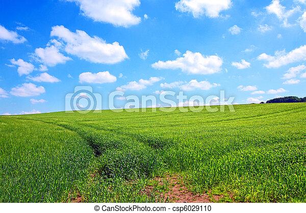 Beautiful Spring scenery - csp6029110