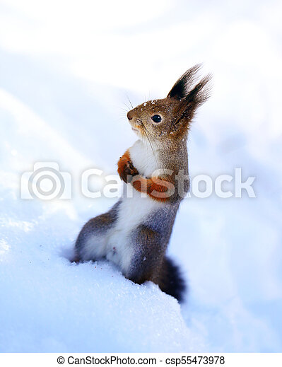 Beautiful squirrel on a tree - csp55473978