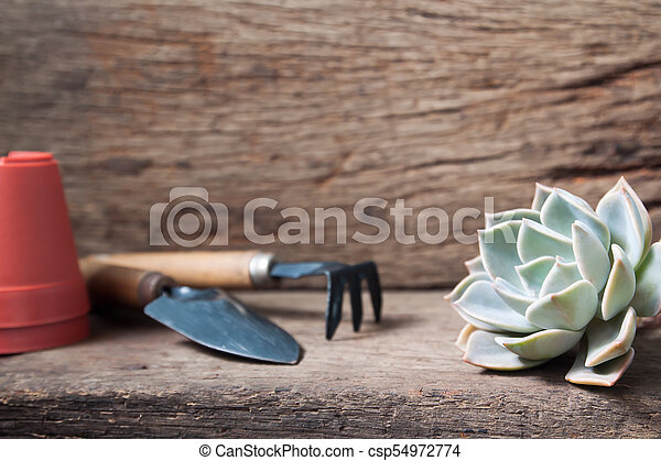 Beautiful succulent with garden tools on wooden table - csp54972774