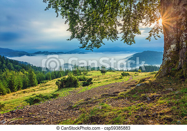 Beautiful summer landscape in the mountains. - csp59385883