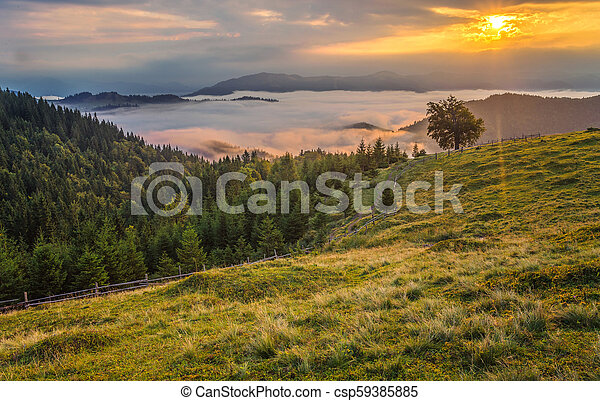 Beautiful summer landscape in the mountains. - csp59385885