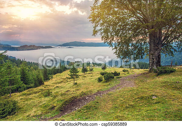 Beautiful summer landscape in the mountains. - csp59385889