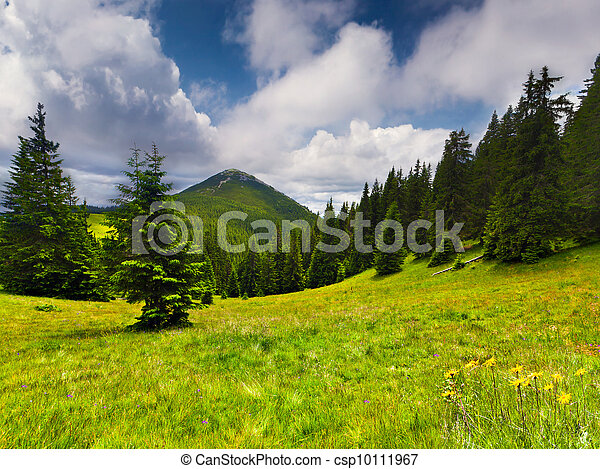 Beautiful summer landscape in the mountains - csp10111967